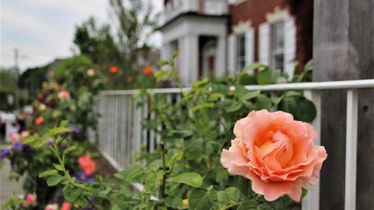 Pequot Library's Southport Garden Stroll returns June 4